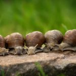 snail creams